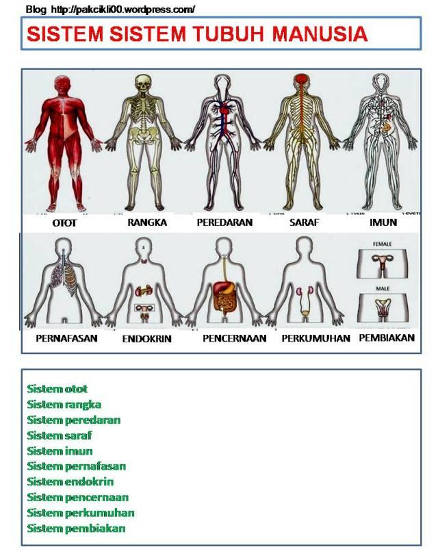 sistem sistem tubuh manusia