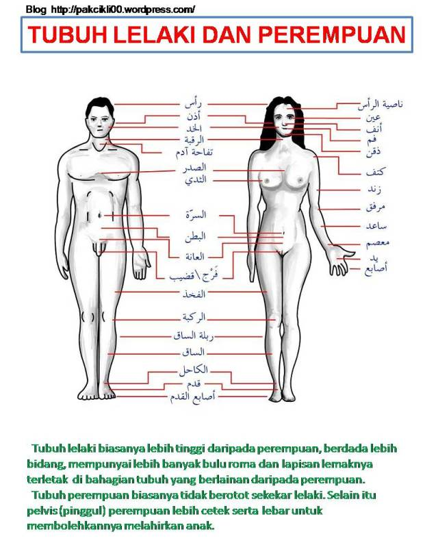 tubuh lelaki dan perempuan