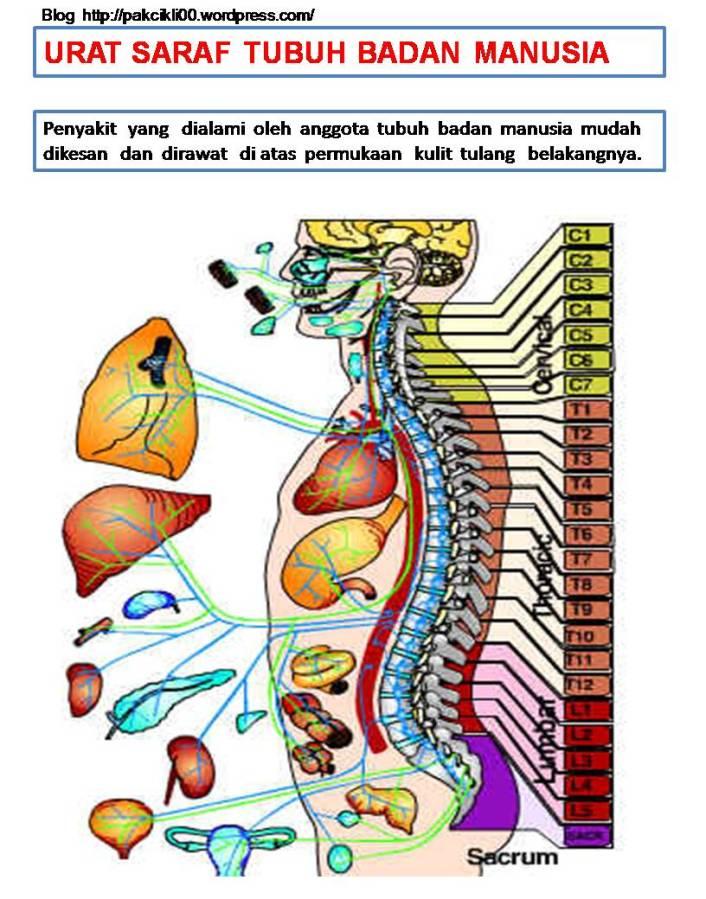 urat saraf tubuh badan manusia