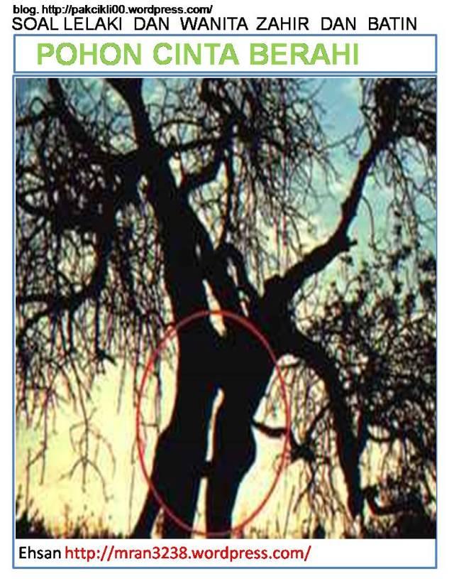 pohon cinta berahi