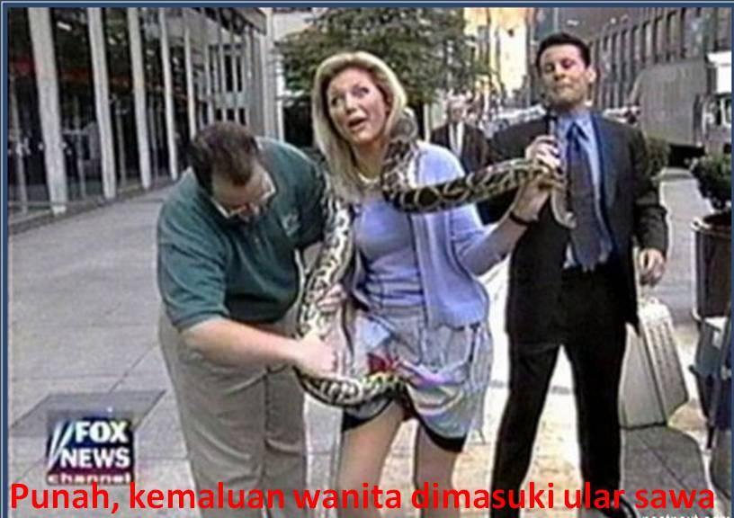 Punah, kemaluan wanita dimasuki ular sawa